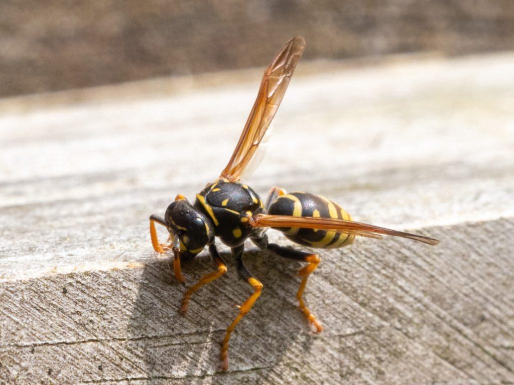 insecten-waarnemen