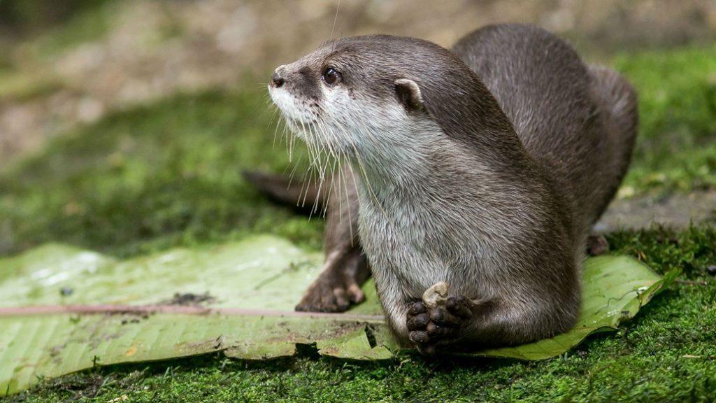 otter-in-nederland